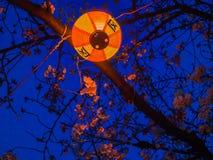 箱根,日本- 2017年7月02日:在一个黄色灯笼的Japanesse信件在樱花的晚上在庄严的佐仓 免版税图库摄影