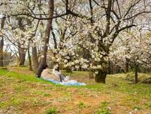 箱根,日本- 2017年7月02日:坐在公园和享受看法的未认出的夫妇在hanami公园在樱桃期间 库存图片