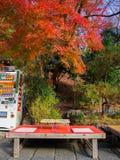 箱根,日本- 2017年7月02日:汁液户外自动贩卖机在秋天风景,黄色,橙色和红色秋天树 库存照片