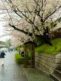 箱根,日本- 2017年7月02日:走近一个投币式公用电话的未认出的人民,在Higashiyama区用樱桃 免版税库存照片
