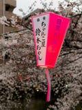 箱根,日本- 2017年7月02日:在一个桃红色和白色灯笼的Japanesse信件有美丽的景色樱花的 免版税库存照片
