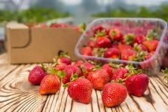 箱草莓在农夫市场上 充分条板箱草莓属 图库摄影