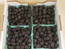 箱黑莓 免版税库存图片