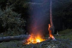 篝火在与飞行的晚上在偏僻的杉树附近发火花 库存图片