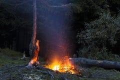 篝火在与飞行的晚上在偏僻的杉树附近发火花 免版税库存图片