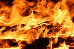 篝火在晚上 灼烧的木头 库存照片