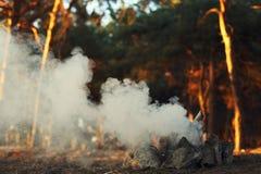 篝火在杉木森林里,没有火的烟 库存照片