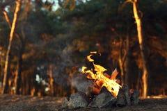 篝火在杉木森林里 免版税库存图片