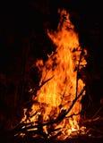 篝火在森林在晚上 免版税库存照片