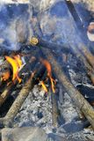 篝火在森林里准备好烤肉 免版税库存图片