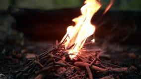 篝火在森林里在晚上 股票录像