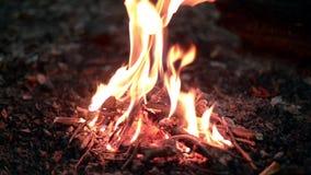篝火在森林里在晚上 股票视频