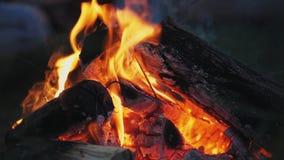 篝火在森林里在晚上 影视素材