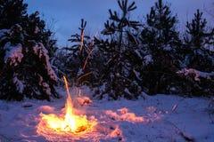 篝火在森林里在晚上 免版税图库摄影