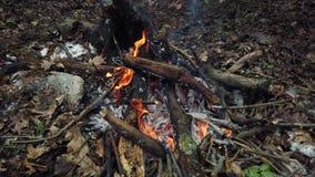 篝火在森林里 股票录像