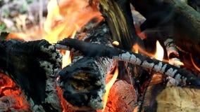 篝火在森林里 影视素材