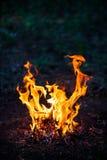 篝火在森林里 库存图片