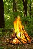 篝火在森林里 库存照片