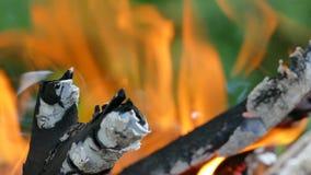 篝火本质上以绿色树为背景的 在野餐的灼烧的木头 木炭和火焰 影视素材