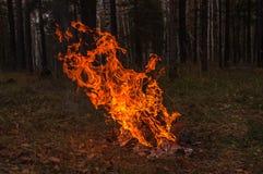 篝火火焰火森林秋天 免版税库存照片
