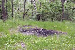 篝火灰在森林沼地的 免版税库存照片