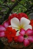 篮子五颜六色的花 免版税库存照片