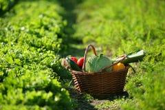篮子充分的蔬菜 库存照片