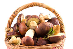 篮子充分的蘑菇 免版税库存图片
