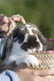 篮子兔子 免版税图库摄影