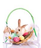 篮子兔宝宝复活节 免版税图库摄影
