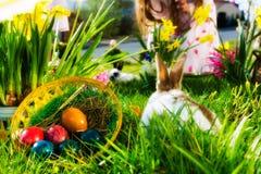 篮子兔宝宝复活节彩蛋草甸 免版税库存照片