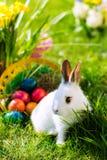 篮子兔宝宝复活节彩蛋草甸 库存照片