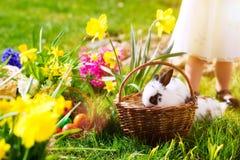 篮子兔宝宝复活节彩蛋草甸 图库摄影