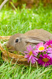 篮子兔宝宝复活节彩蛋 库存照片