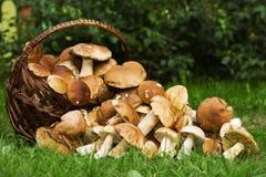 篮子可食的蘑菇 免版税库存照片