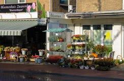 篮子和罐有植物的架子的在Zwanenburg 免版税库存图片