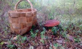 篮子和蘑菇 库存图片