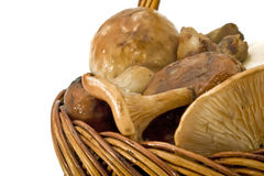 篮子堆蘑菇 免版税库存图片
