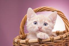 篮子小猫一点 免版税图库摄影