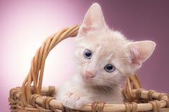 篮子小猫一点 免版税库存照片