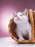篮子小猫一点 库存照片