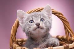 篮子小猫一点 库存图片