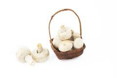 篮子小的蘑菇 库存图片
