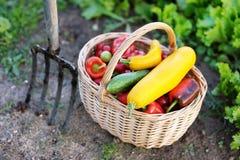 篮子新鲜的有机蔬菜 免版税库存图片