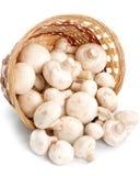 篮子新鲜的蘑菇 库存照片