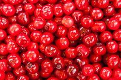 篮子明亮的红色新近地充分采摘了早期的甜樱桃 免版税库存照片