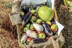篮子果菜类 免版税库存照片