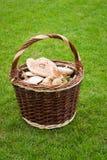 篮子浆果构成柳条蕨的蘑菇 库存图片