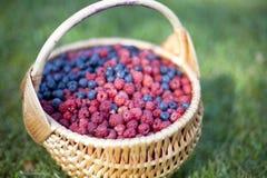 篮子浆果 图库摄影