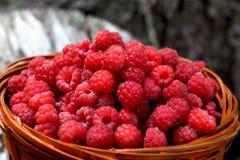 篮子用从森林的莓 免版税图库摄影